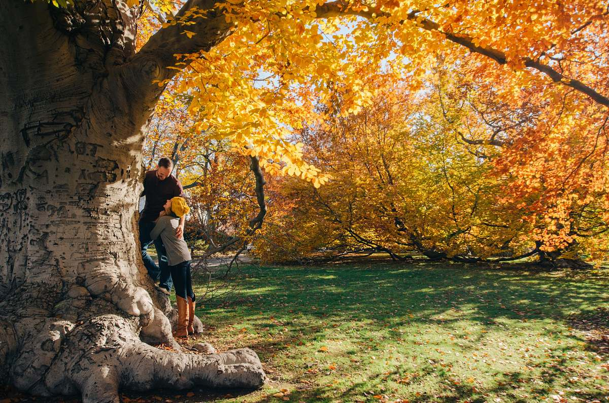 stock photos free  of person man and woman near yellow-petaled flower tree human