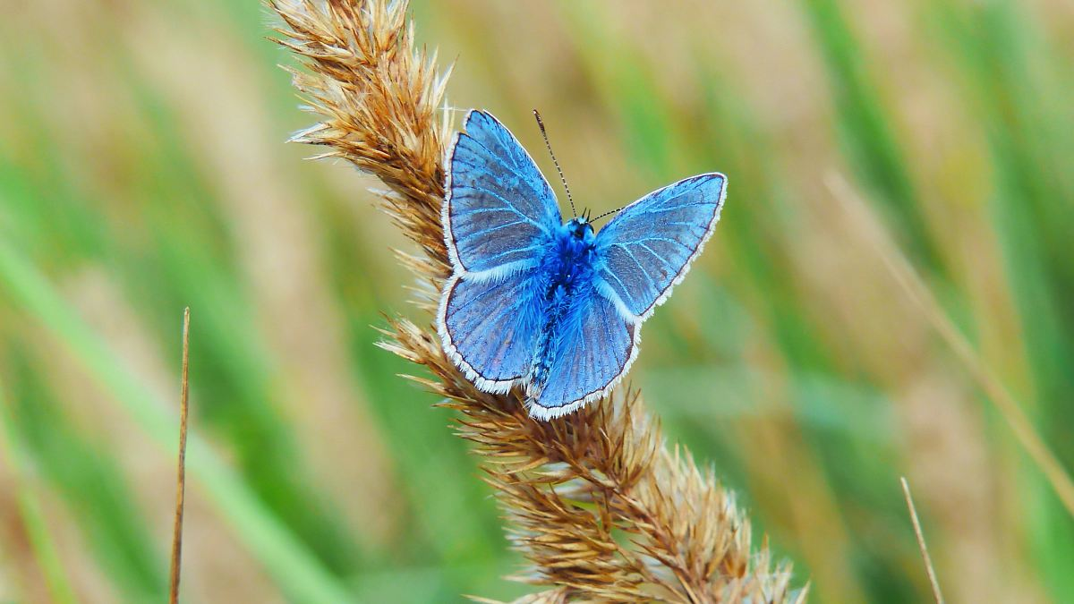 stock photos free  of shallow focus photography of blue butterfly