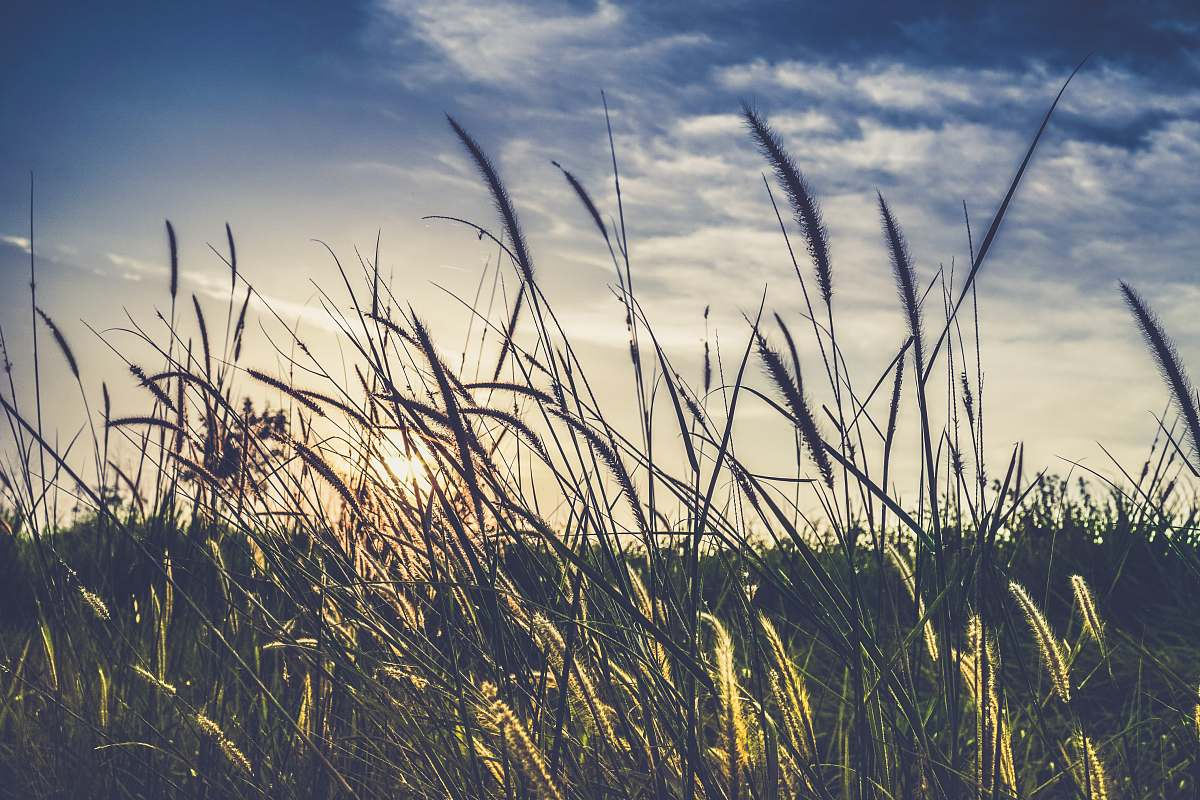stock photos free  of nature landscape photography of green grass field wheat
