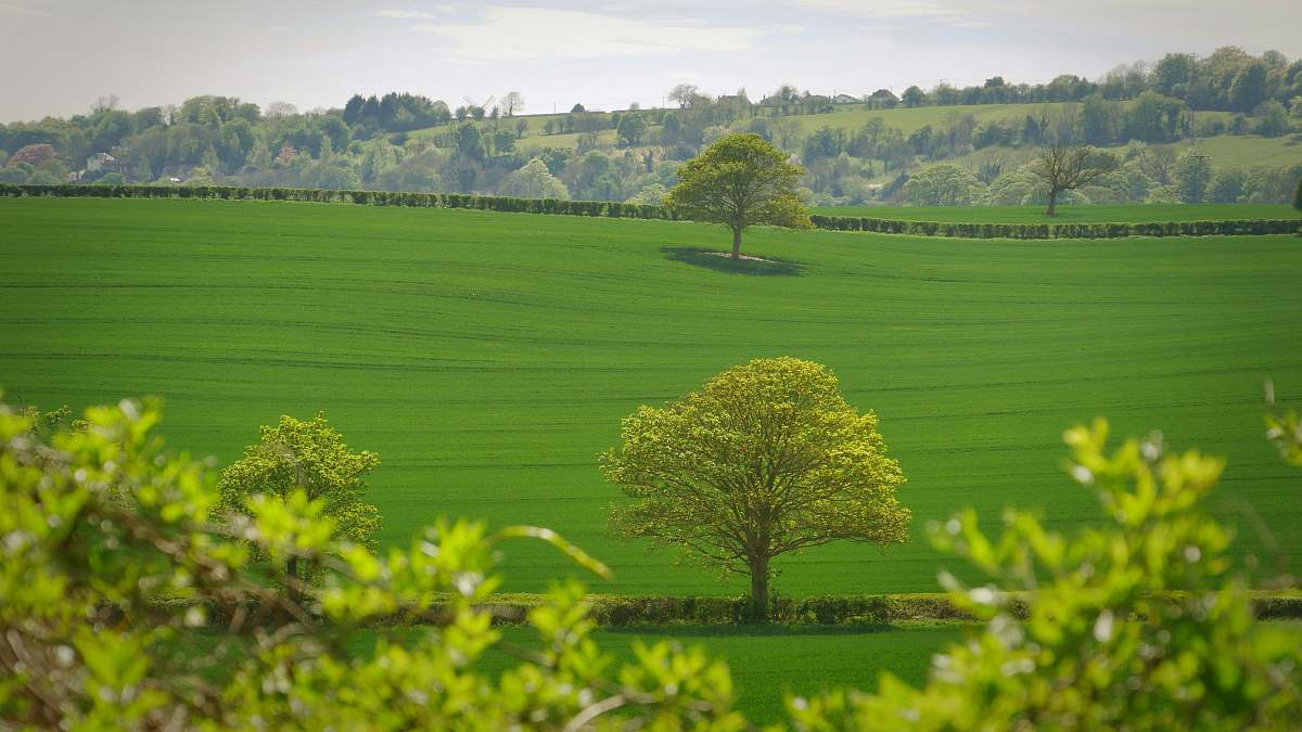 stock photos free  of landscape green tree in the middle of grass field filed