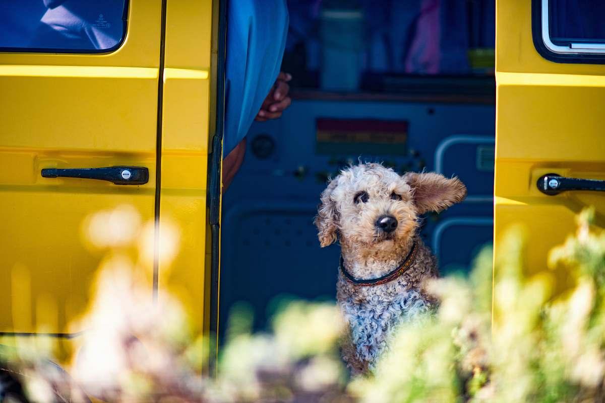 stock photos free  of dog dog on doorway of van bus
