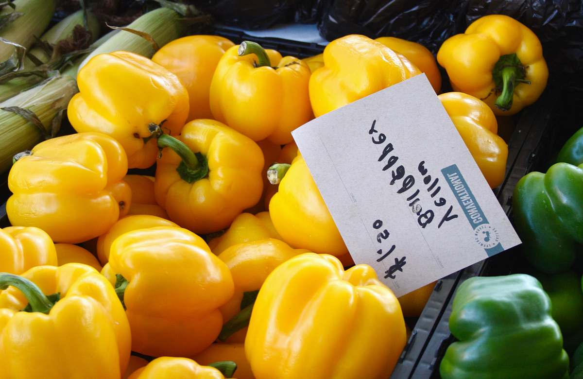 stock photos free  of plant yellow bell peppers pepper