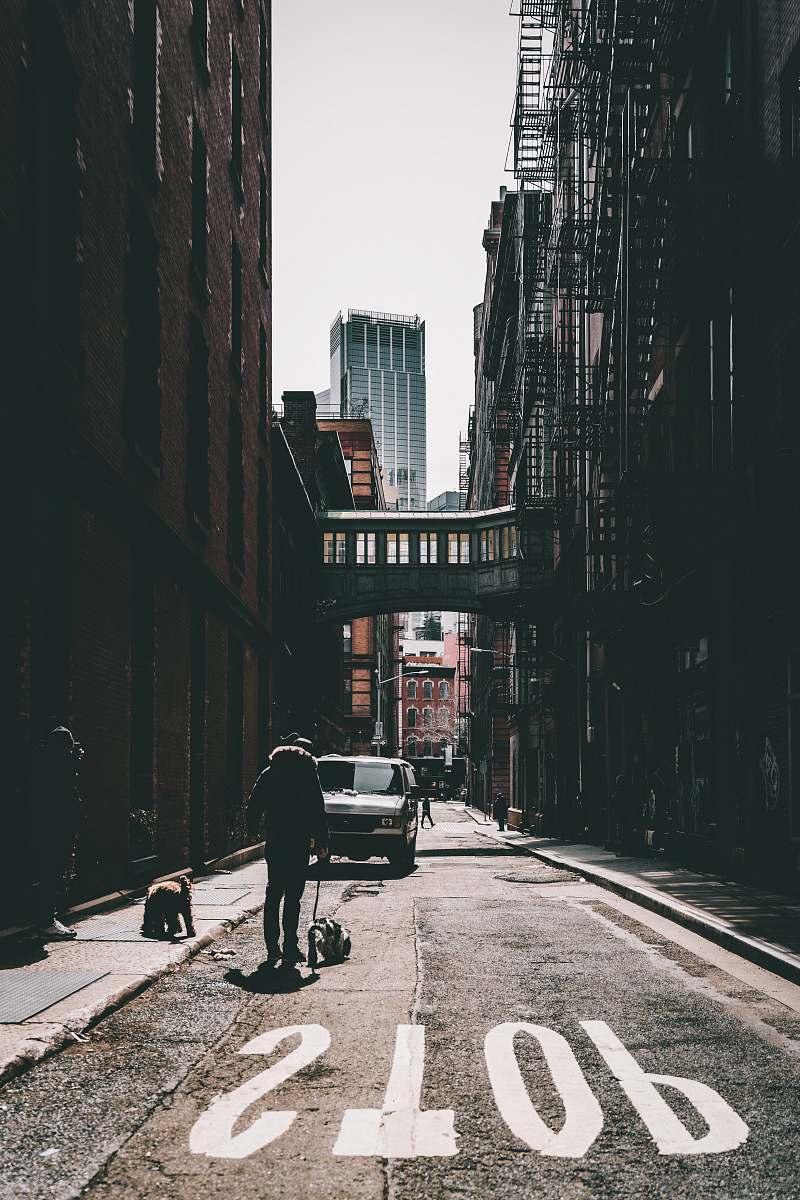 stock photos free  of urban man walking on road with dog during daytime street