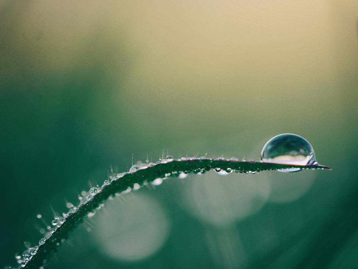stock photos free  of water macro photography of drop of water on top of green plant nature