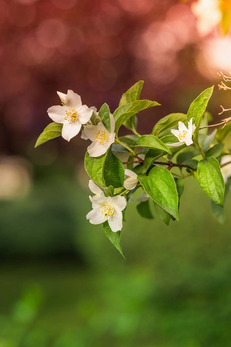 stock photos free  of flower closeup photo of white petaled flower plant