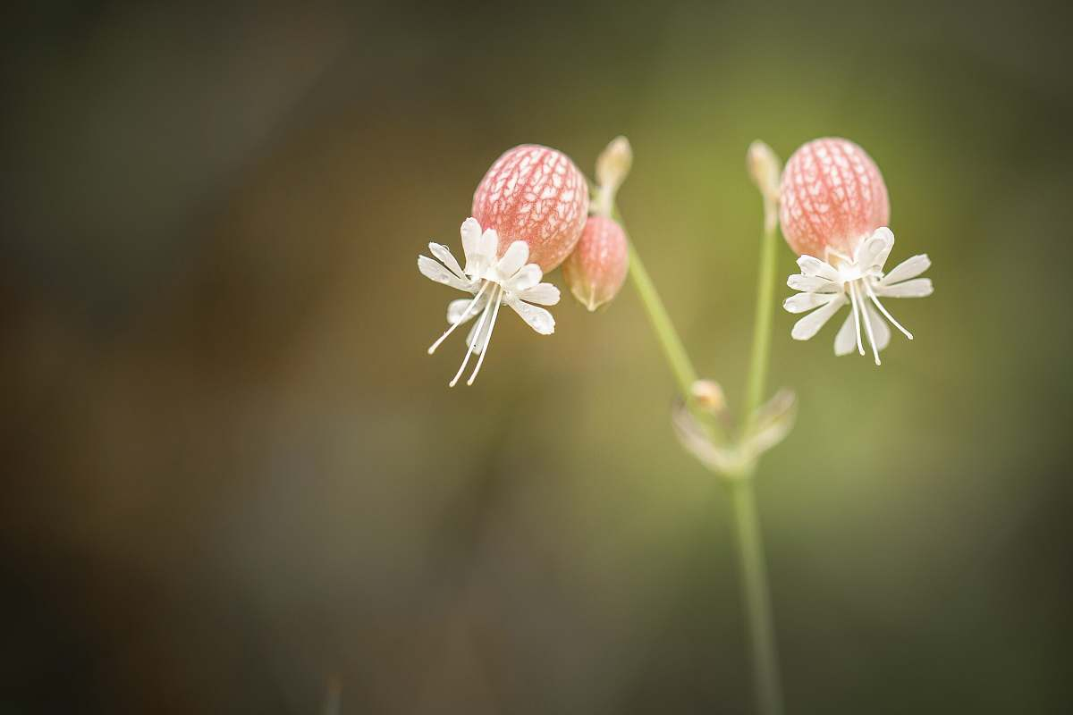 stock photos free  of flower closeup photography of two white petaled flowers blossom