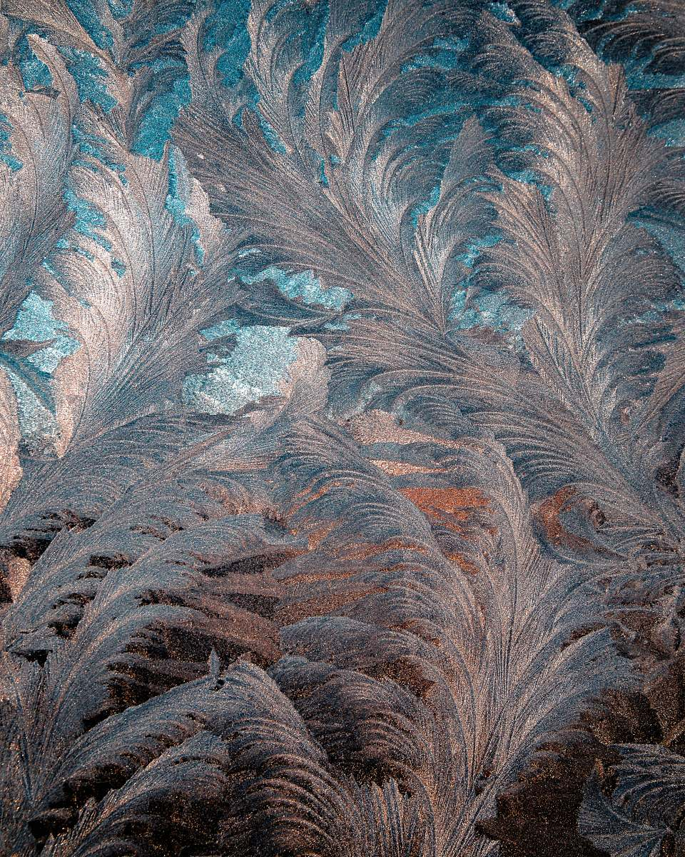stock photos free  of ice blue and gray floral cloth outdoors