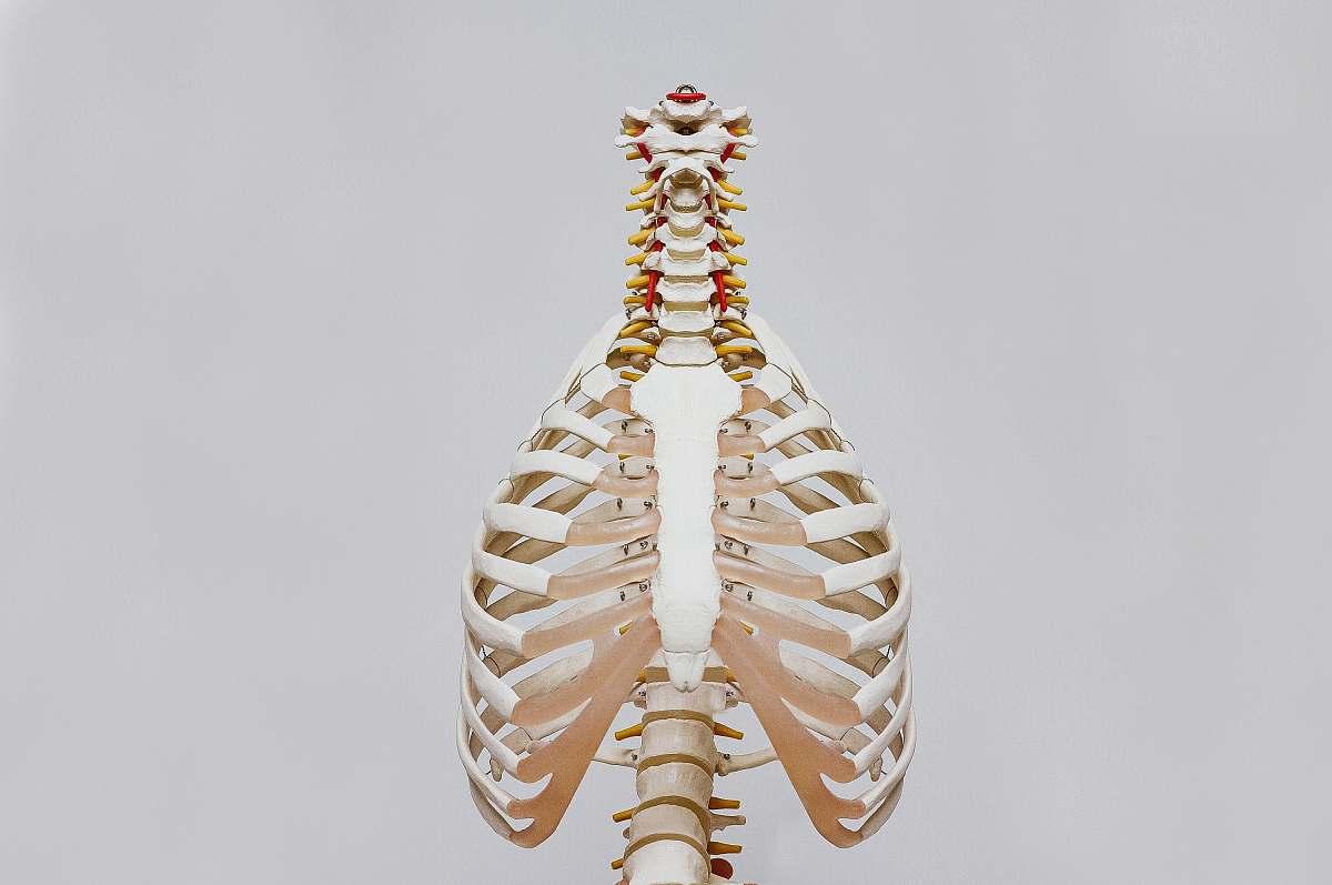 stock photos free  of body beige and white skeleton grey