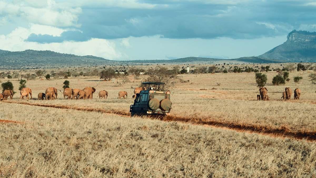 stock photos free  of outdoors farm during daytime mammal
