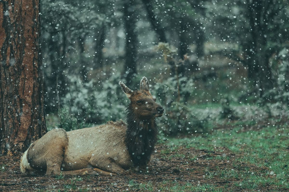 stock photos free  of brown animal reclining on ground on forest