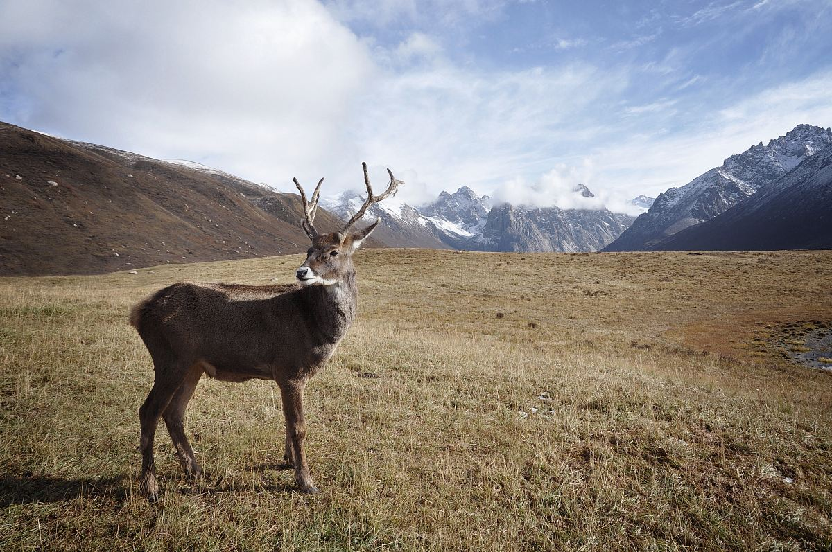 stock photos free  of brown deer