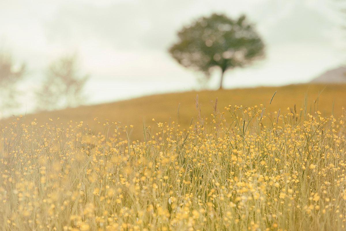 stock photos free  of closeup photo of yellow petaled flowers