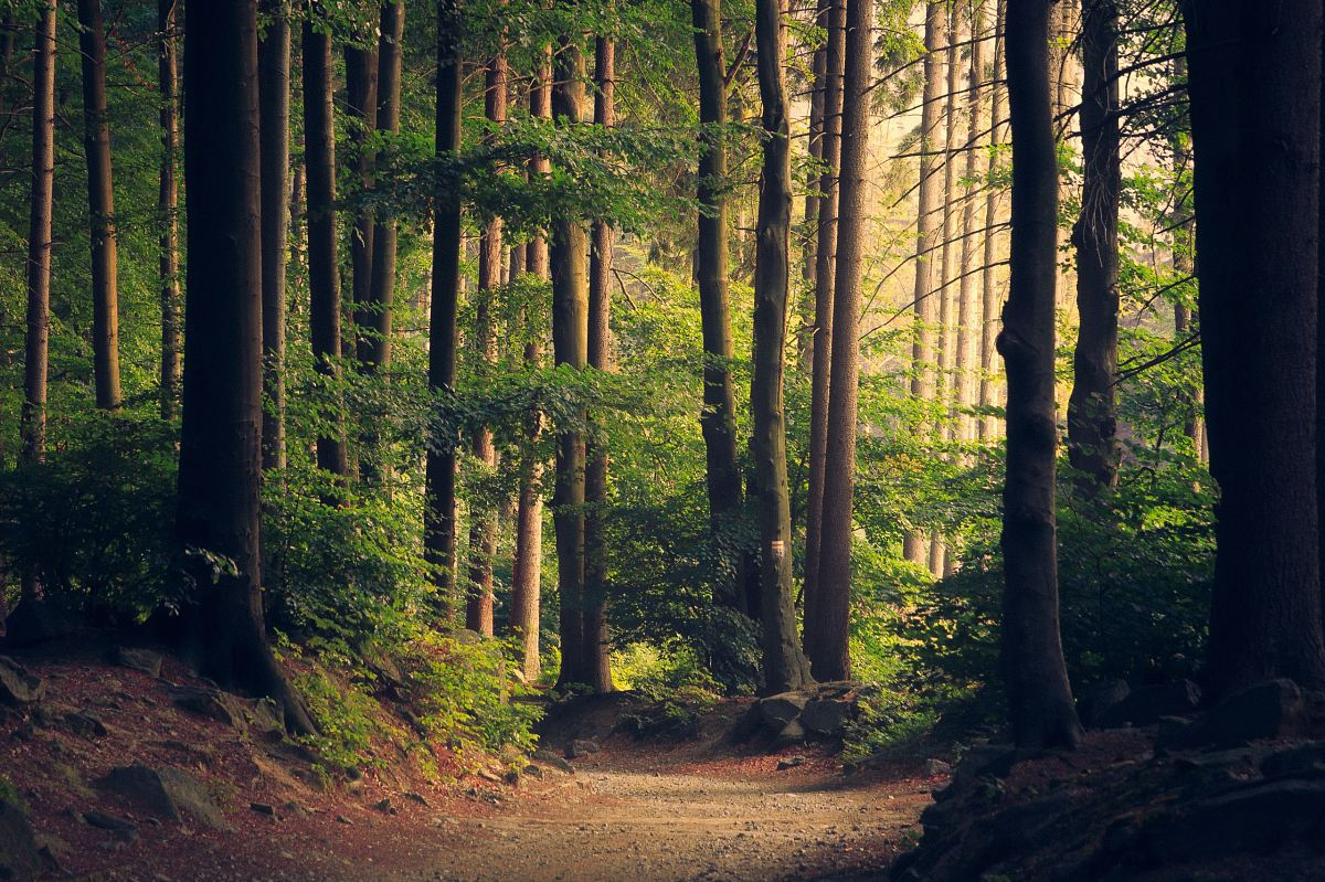 stock photos free  of forest trees