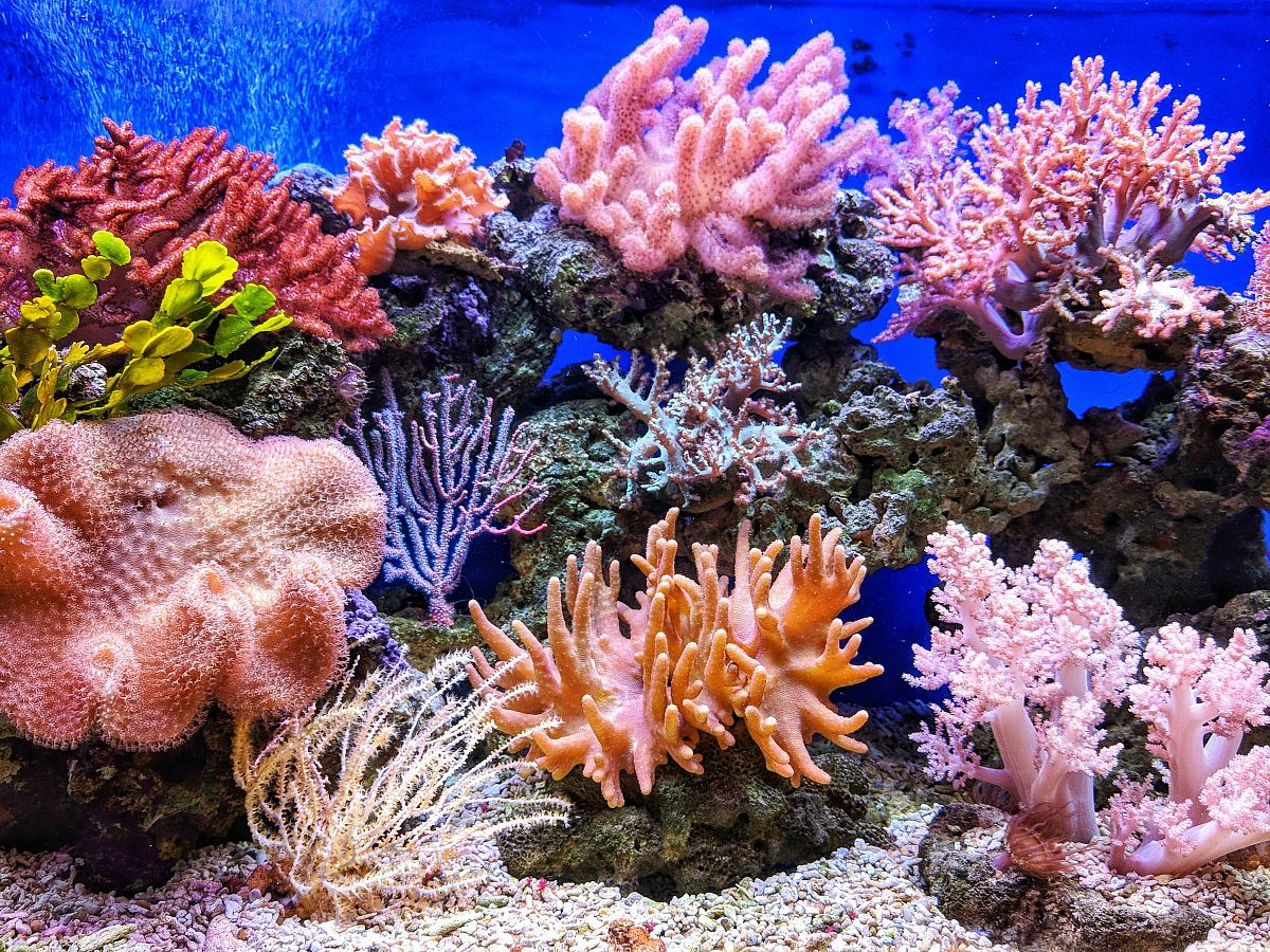 stock photos free  of live corals