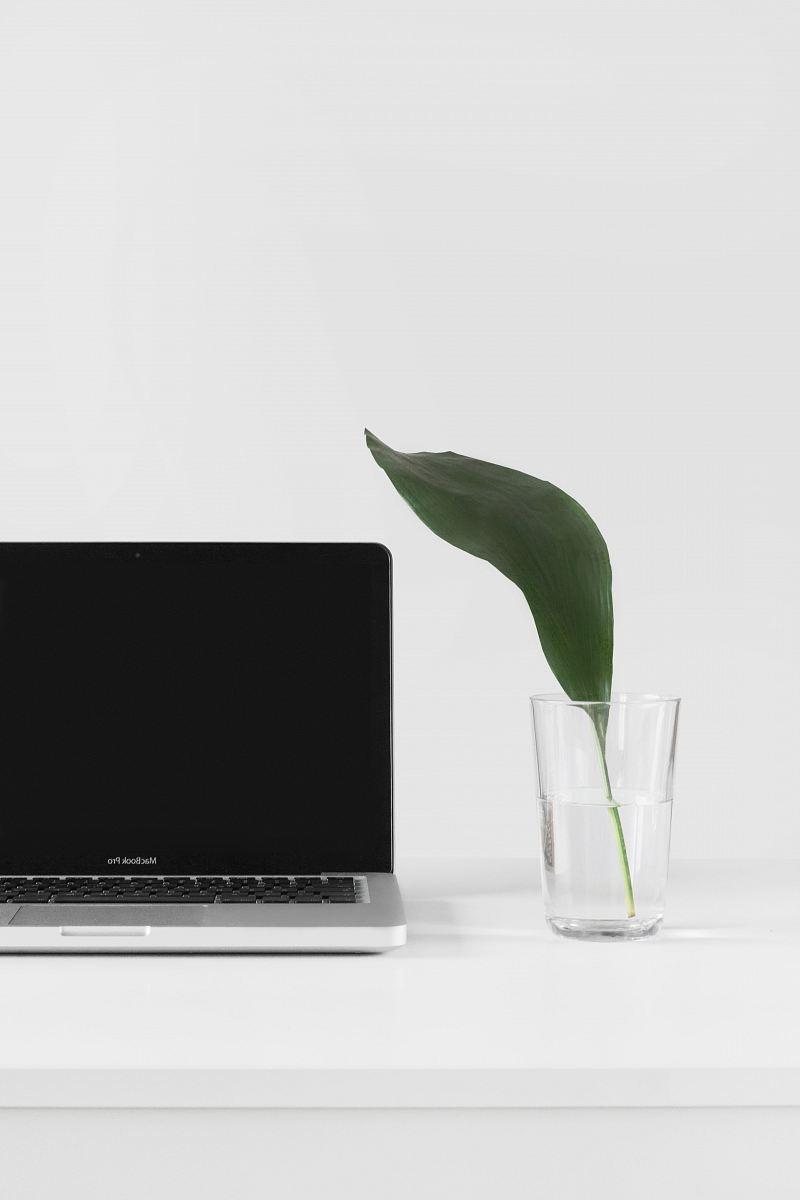 stock photos free  of MacBook Pro beside plant in vase