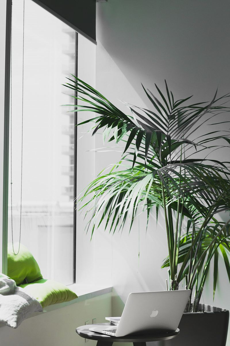 stock photos free  of MacBook Pro near potted plant
