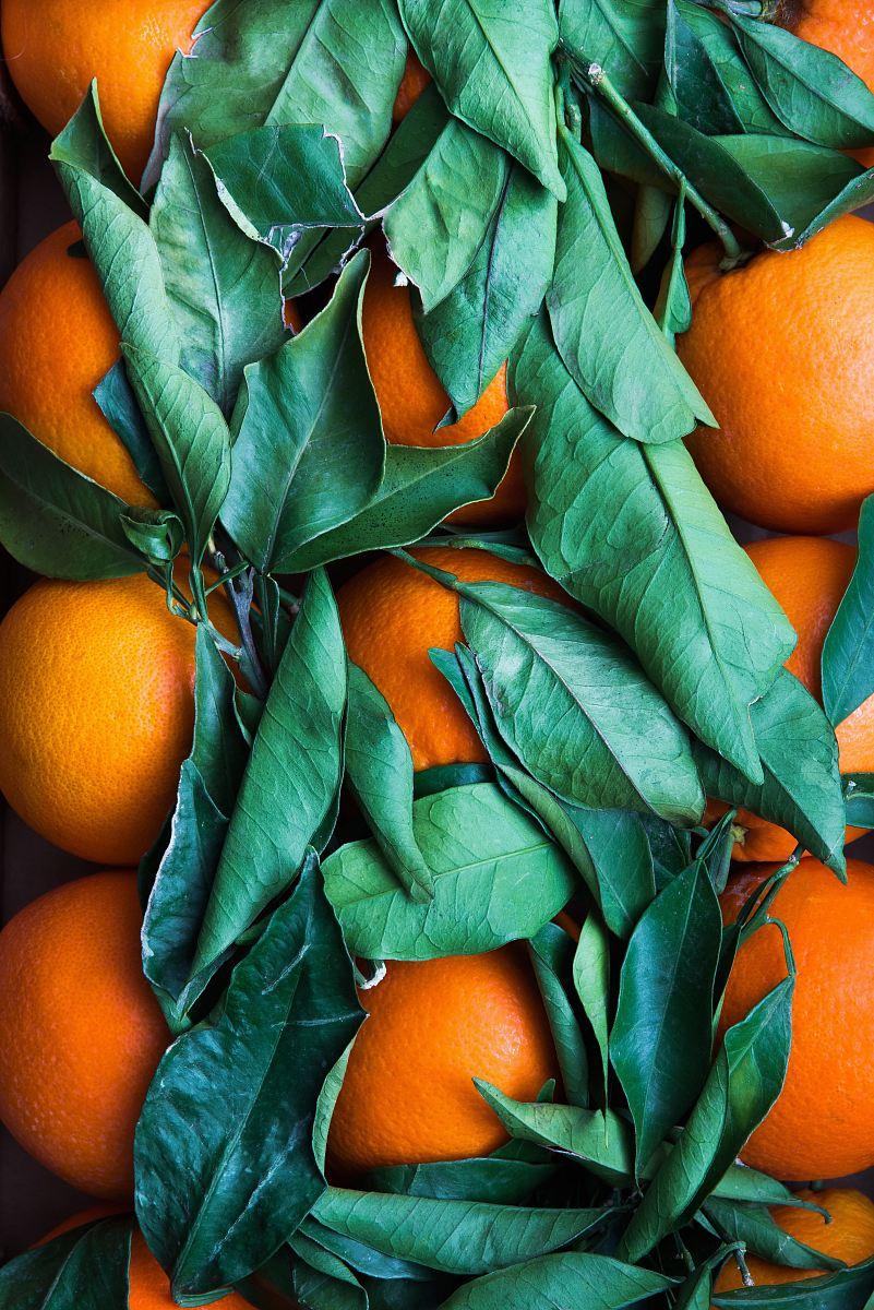 stock photos free  of pile of round orange fruits