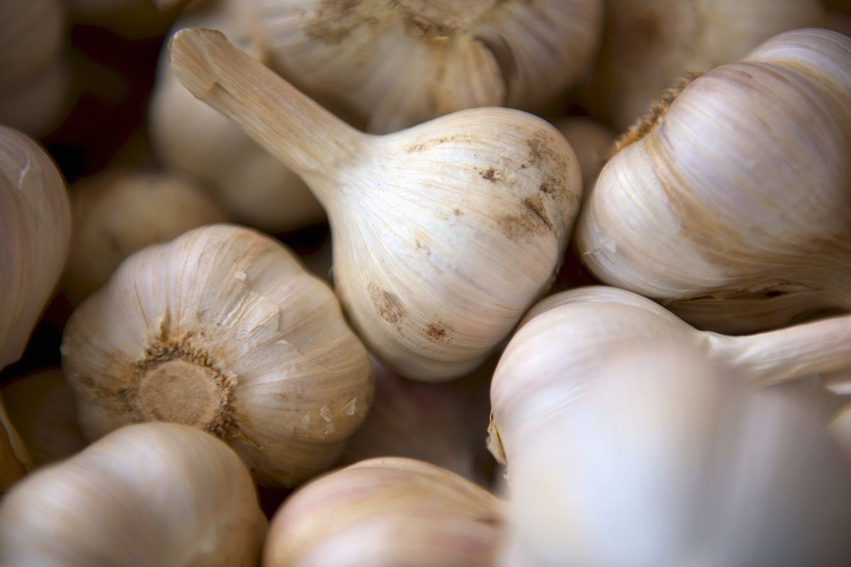 stock photos free