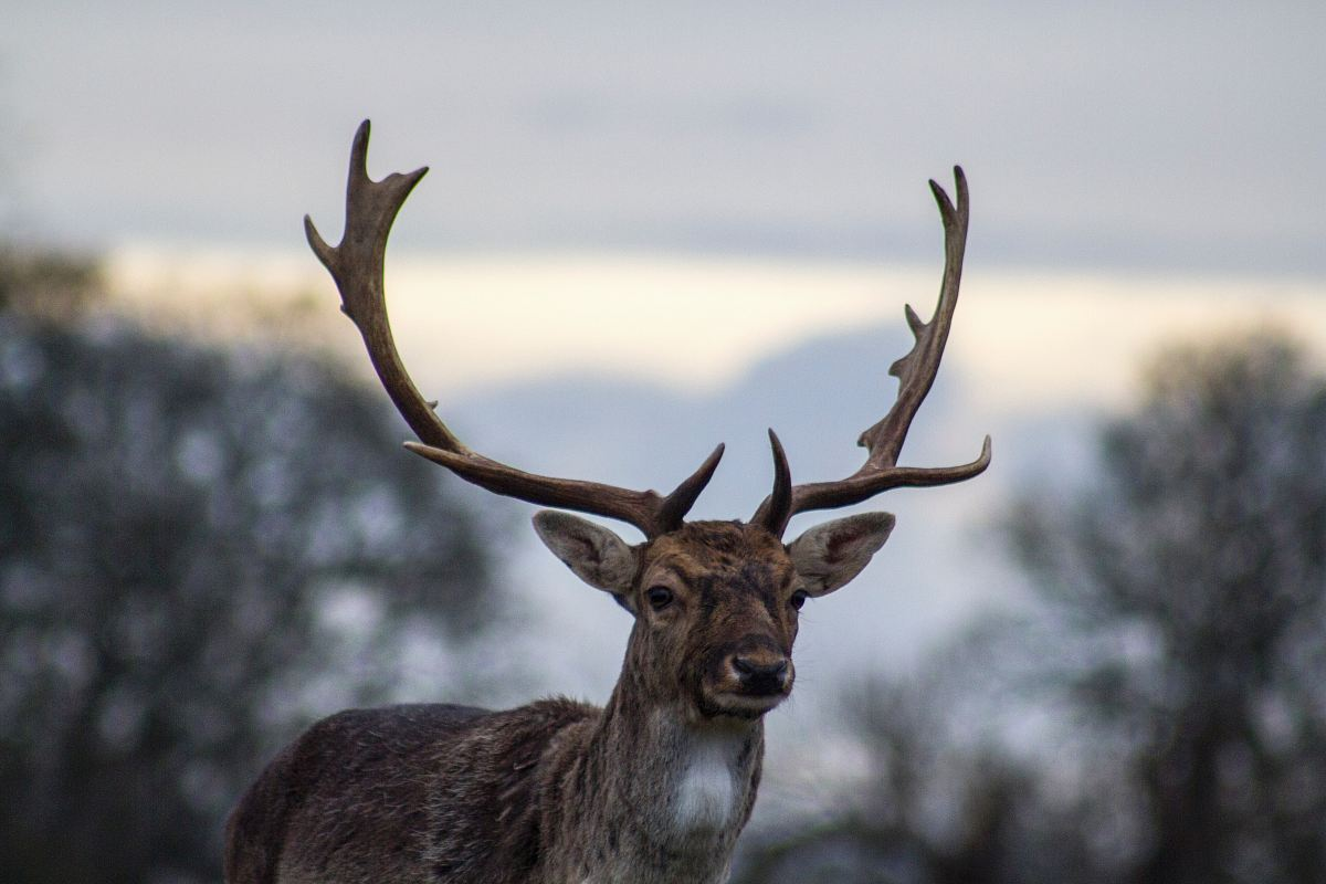 stock photos free  of shadow depth of field photography of deer