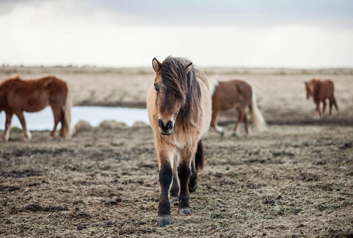 stock photos free  of shallow focus photography of horse