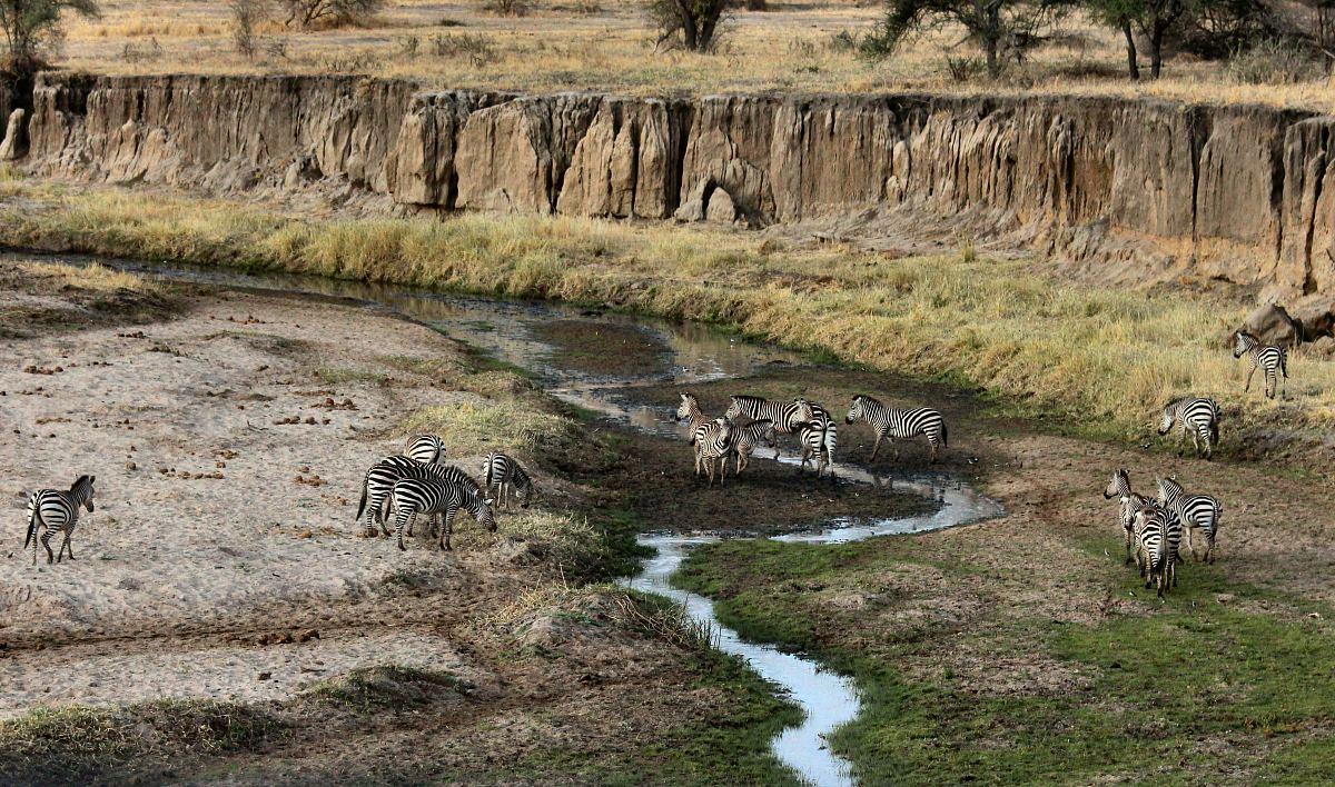 stock photos free  of zebra near mountains