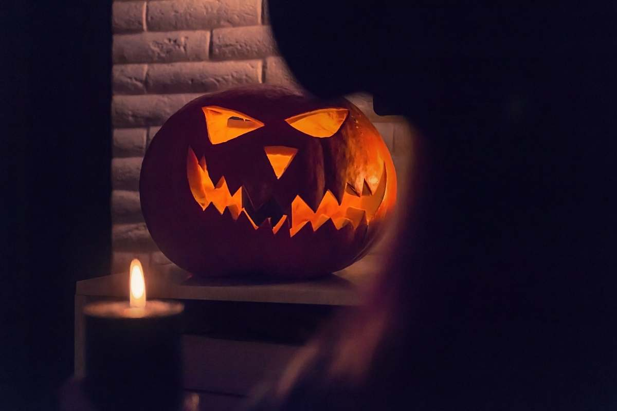 stock photos free  of plant lighted pumpkin on brown wooden table halloween