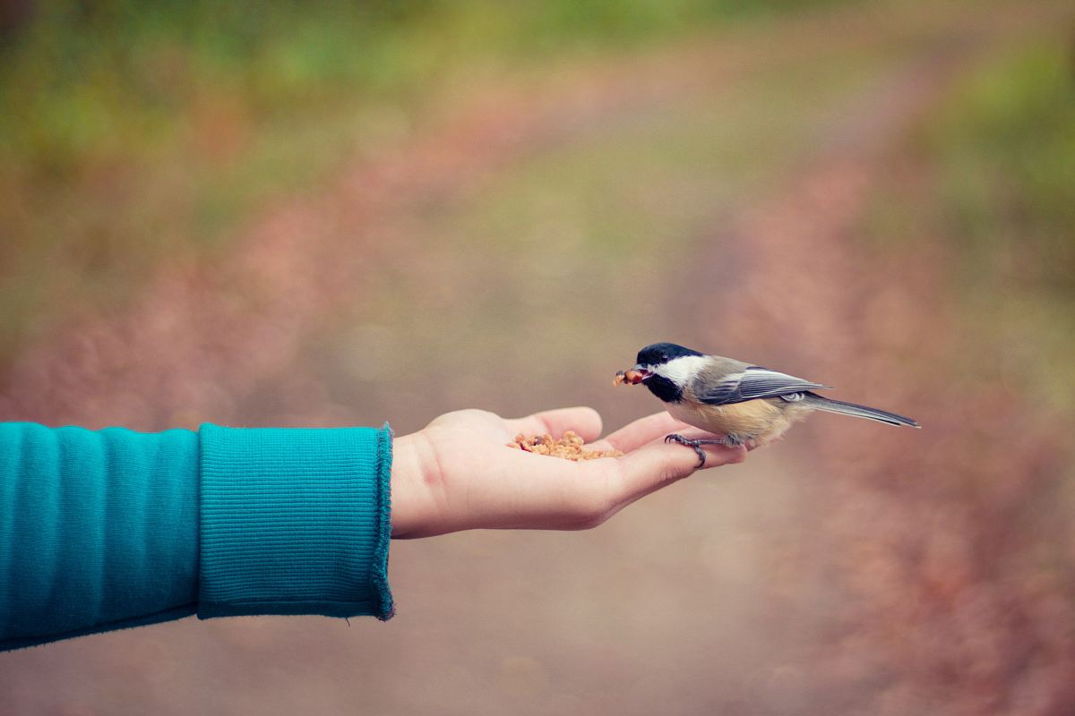 stock photos free  of black, brown, and white bird standing on person right hand