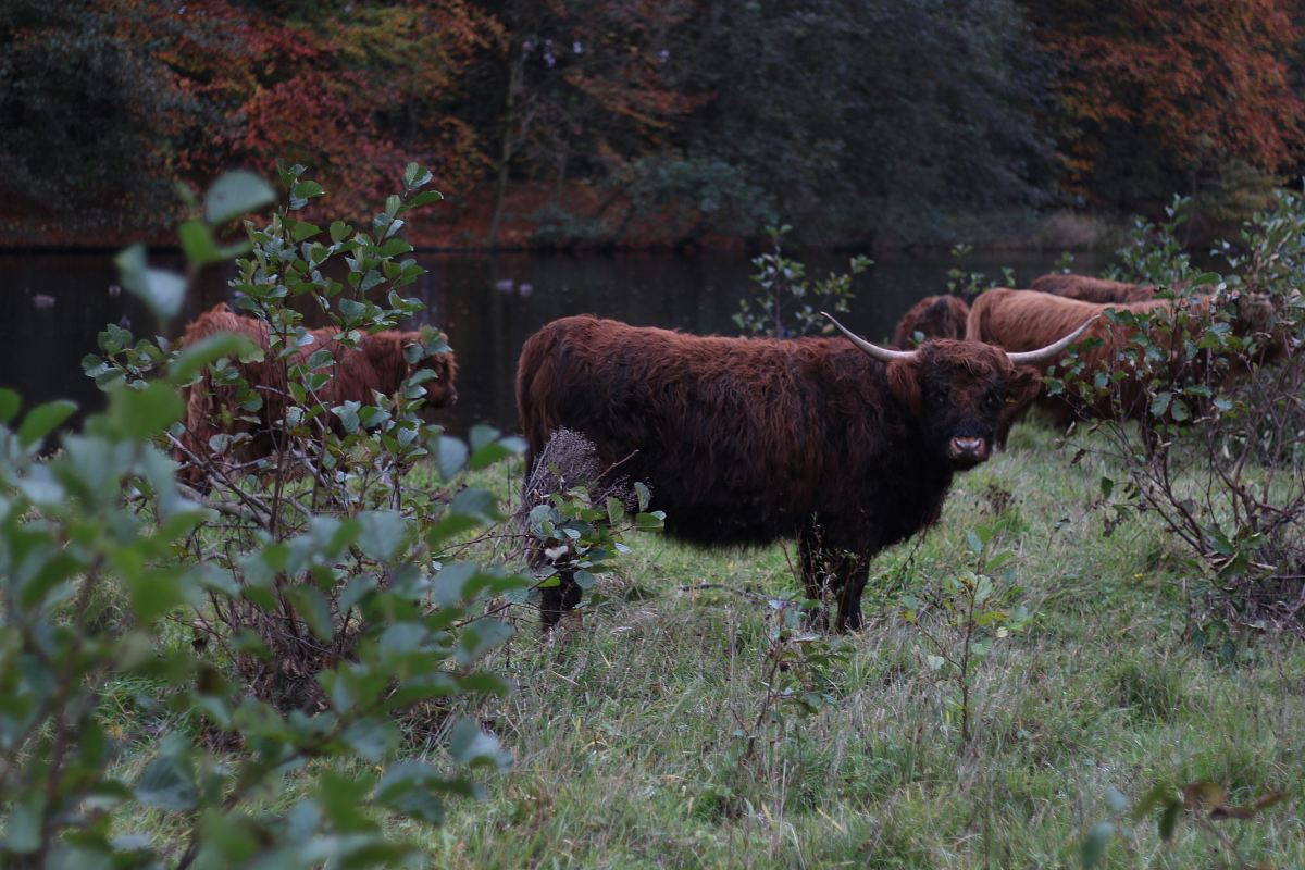 stock photos free  of brown bison near body water during daytime