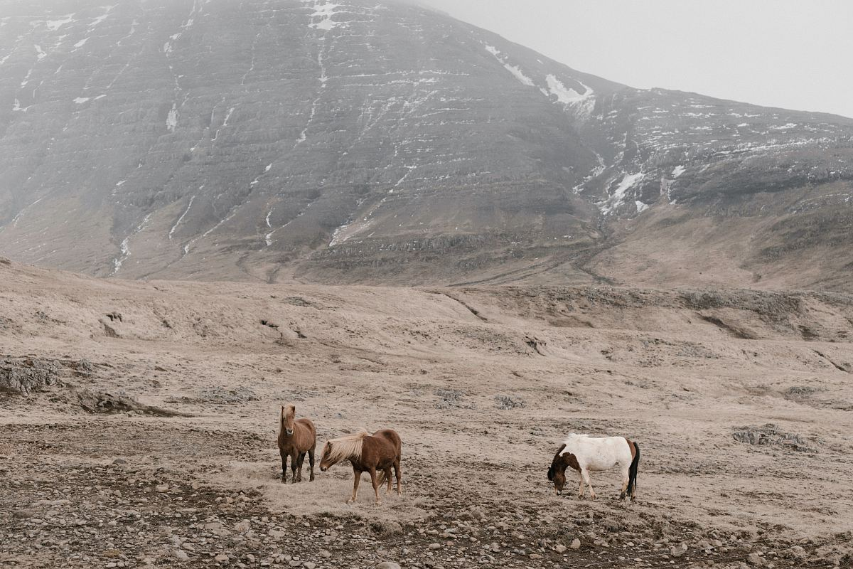 stock photos free  of brown goat between mountain