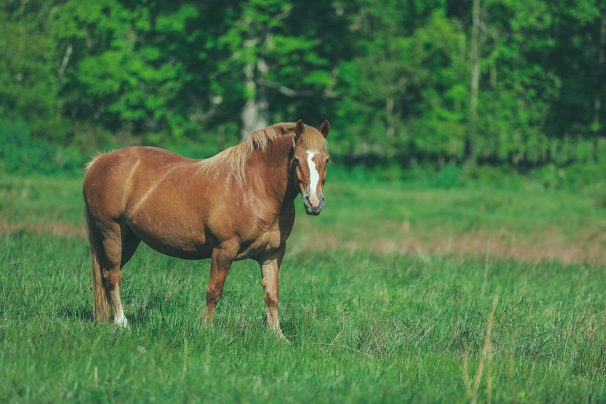 stock photos free  of brown horse
