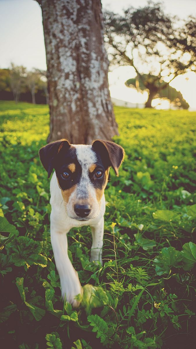 stock photos free  of brown tree trunk across white and black dog