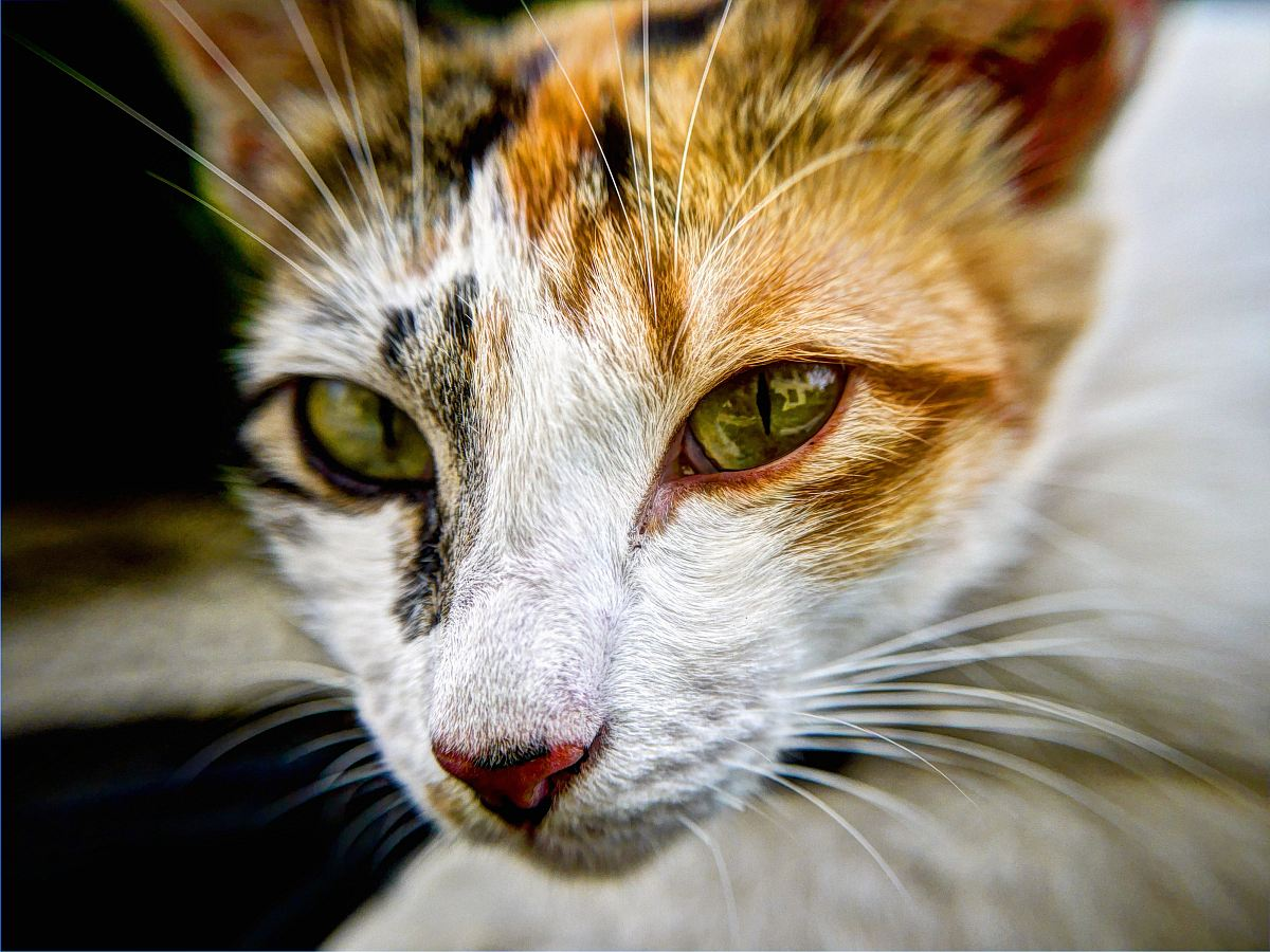 stock photos free  of cat's face in shallow focus lens