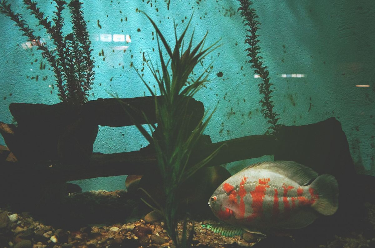 stock photos free  of gray and orange fish beside green leafed plant