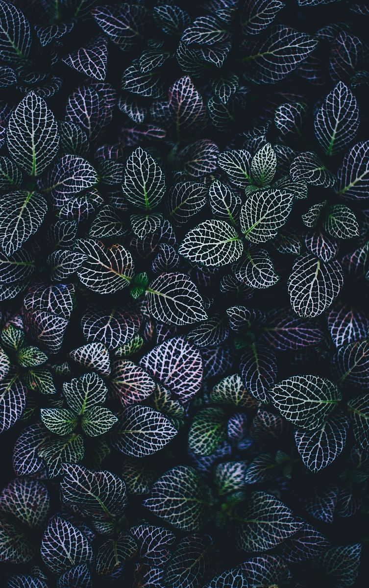 stock photos free  of green and blue leaves plants