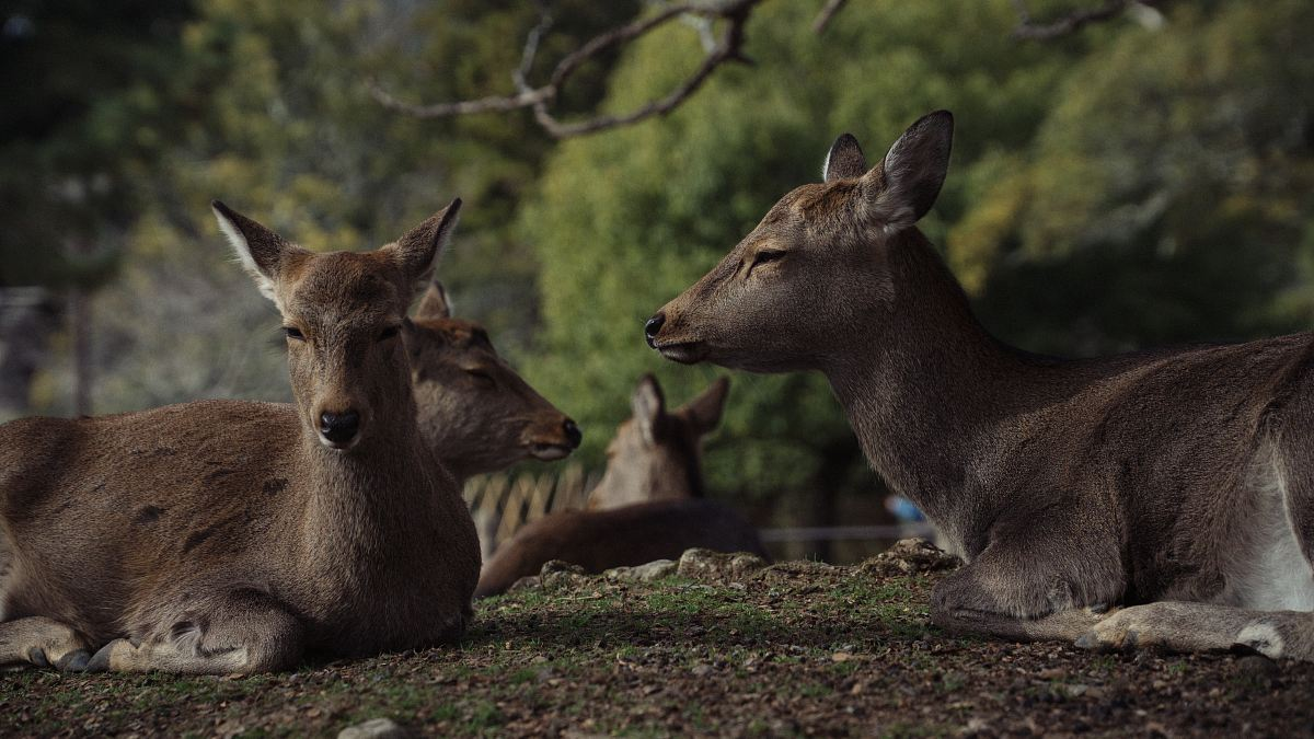 stock photos free  of group of deer
