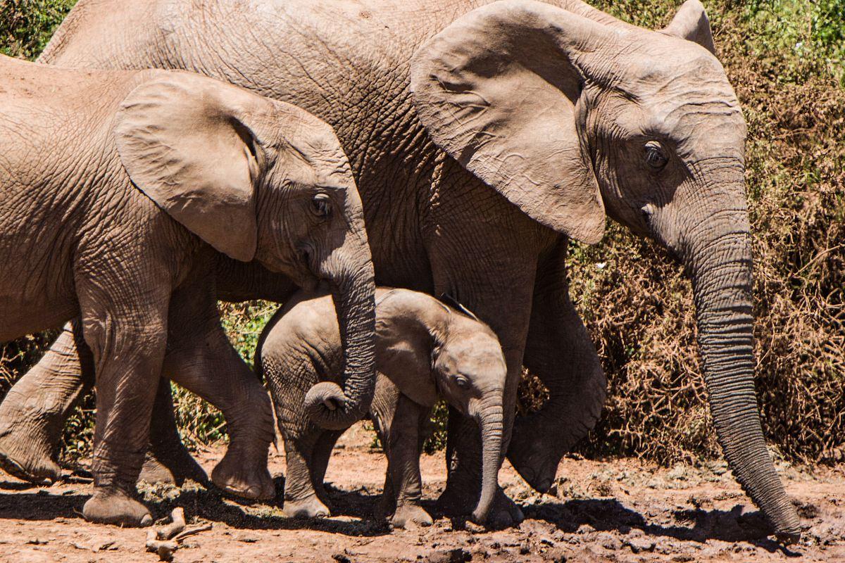 stock photos free  of group of elephants