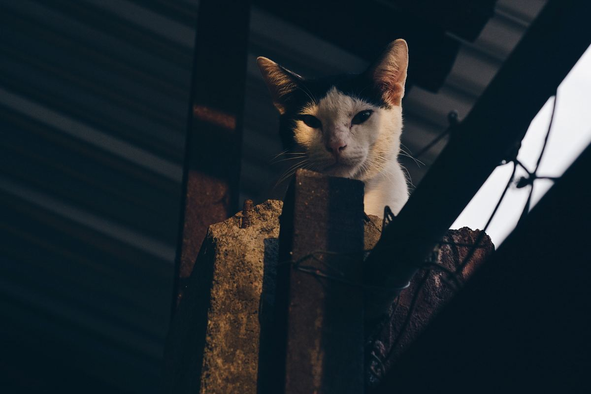 stock photos free  of short-fur white and black cat on gray post