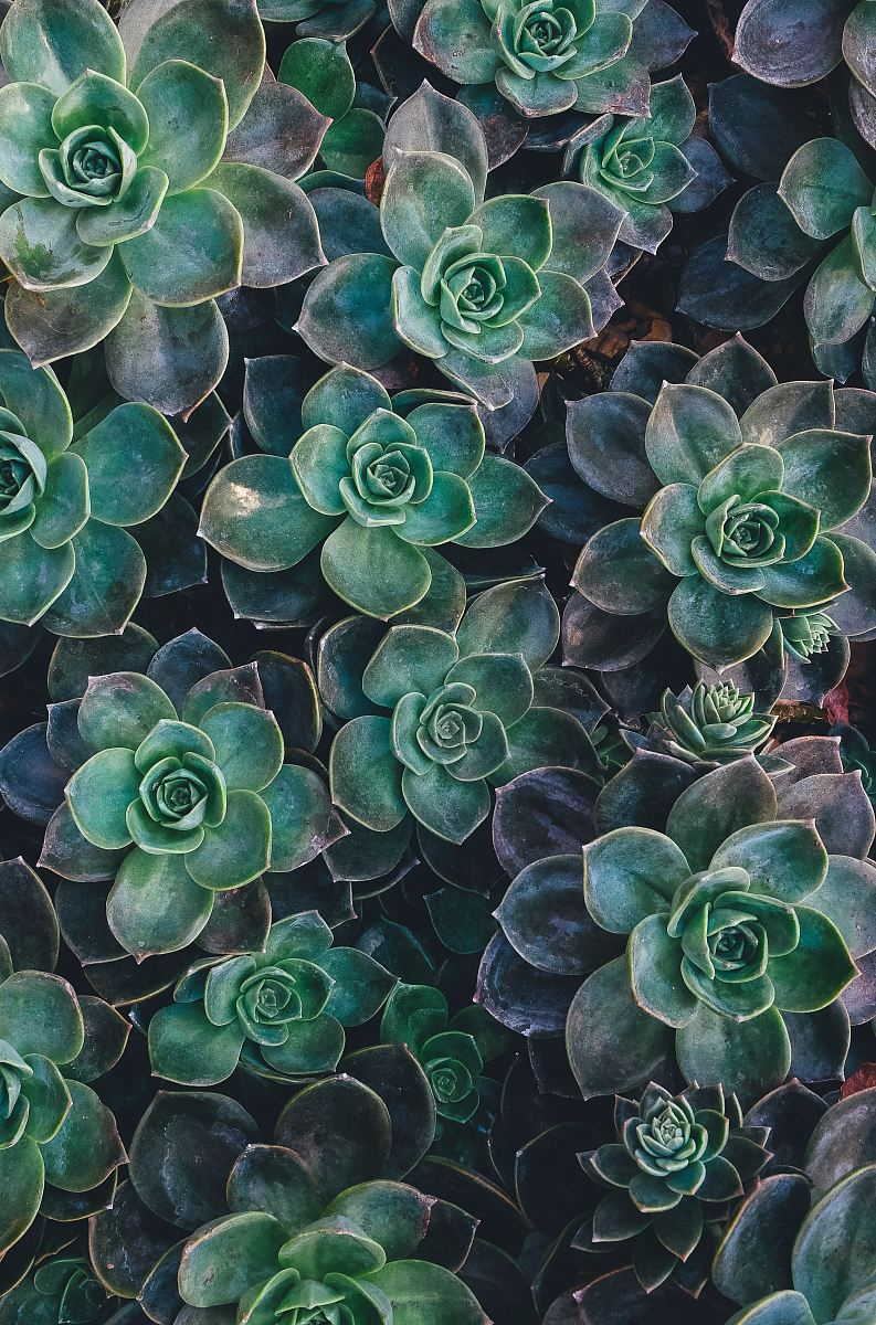 stock photos free  of top view of green succulent plants