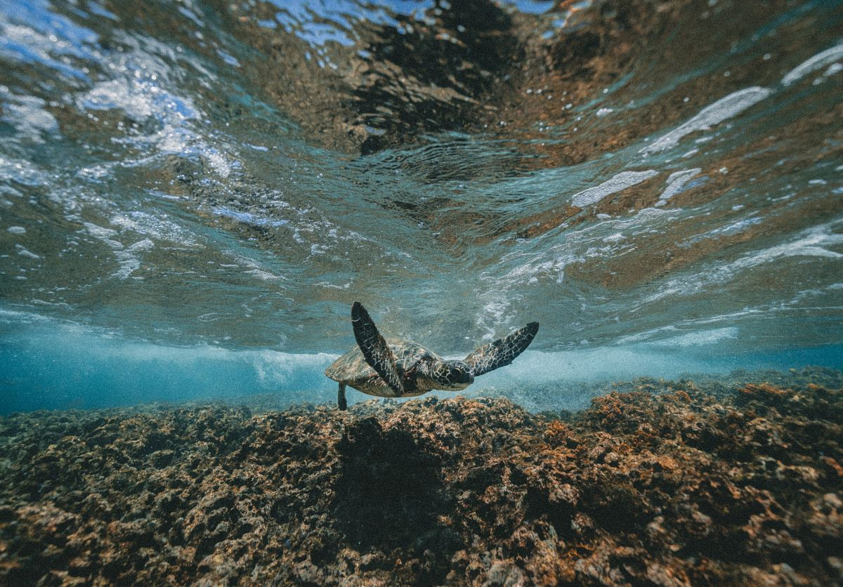 stock photos free  of underwater photography of turtle