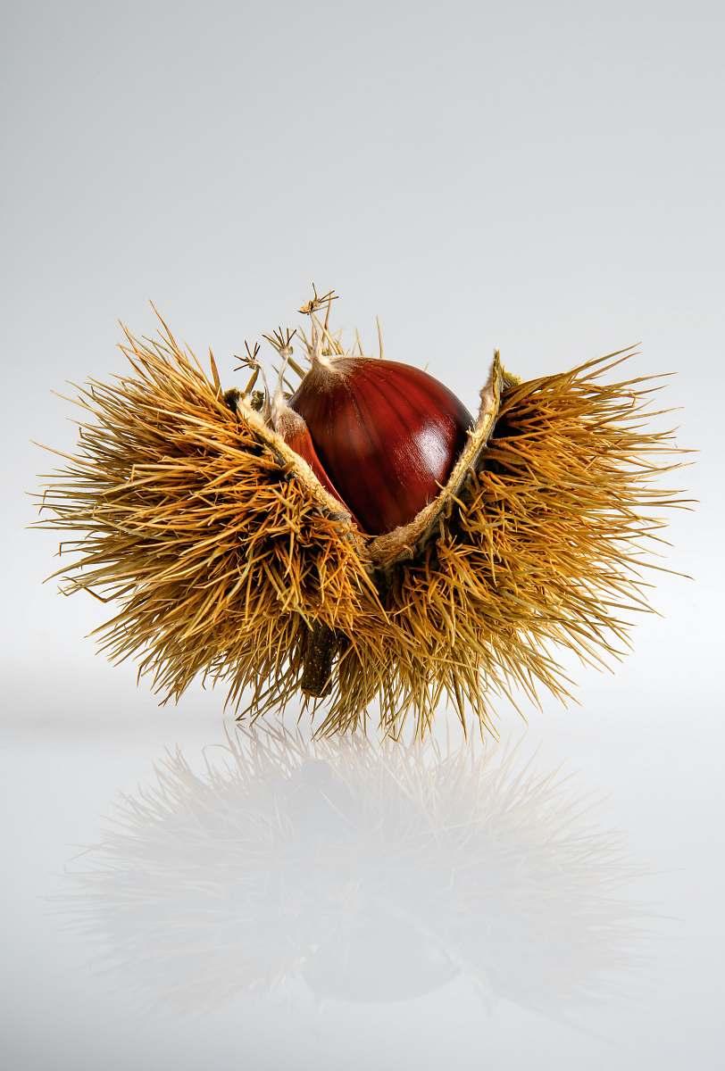 stock photos free  of flora red onion on hays garlic