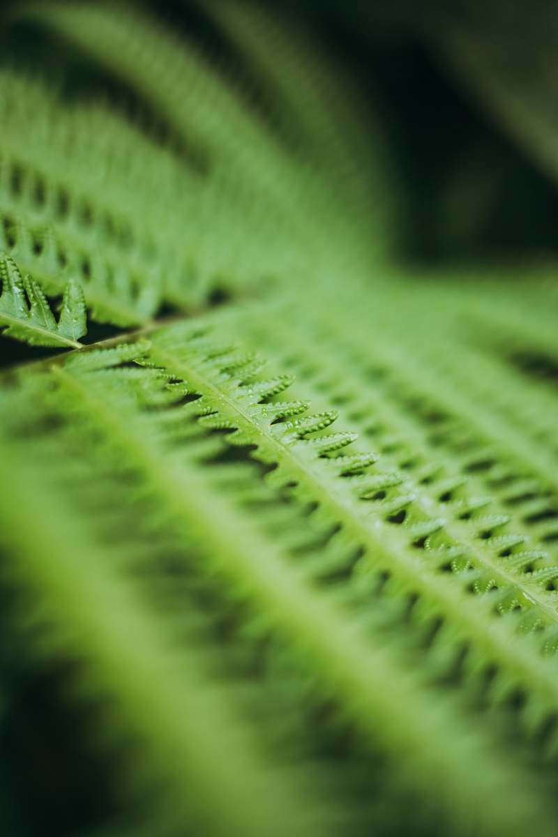 stock photos free  of zipper green-leafed plant teal