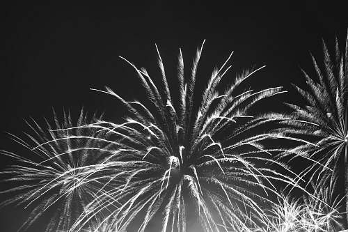 outdoors fireworks display black-and-white