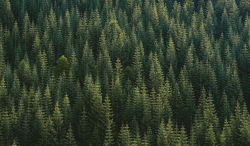 tree aerial photography of forest nature