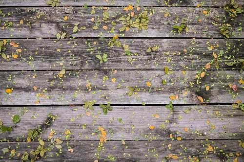 brick brown and green surface fall