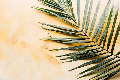 plant palm leaf tropical
