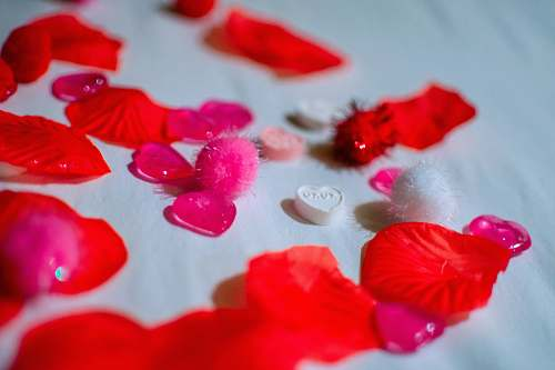 blossom red petals on white textile petal