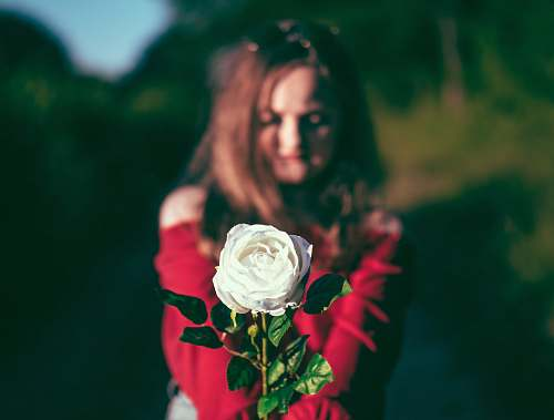 rose woman holding white flower flora