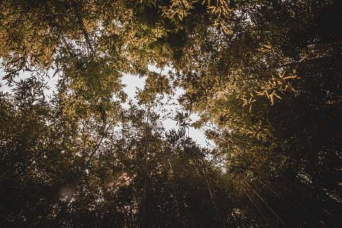 flare low-angle photography of green bamboo trees tree