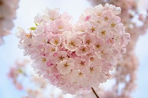 flower macro focus of pink flowers blossom