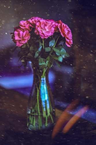 human pink flowers in vase flower